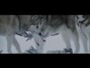 Белый плен \ Eight Below (2005)