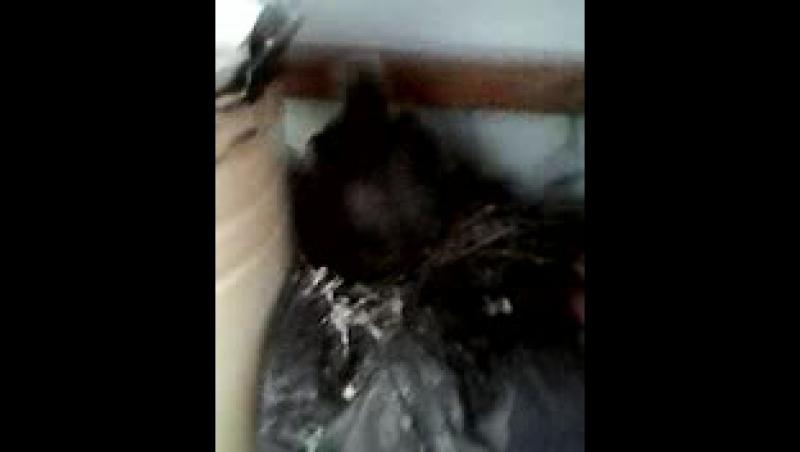Дрессированные голубята Веры Фадеевны :D