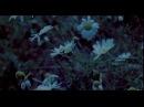 Константин Паустовский. Наедине с осенью, режиссер Н.П.Якубовский, Центрнаучфильм, 1984.