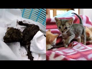 Спасение новорожденных котят из вытяжной вентиляции.