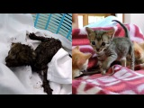 Animal aid unlimited. Newborn orphaned kittens trapped in exhaust duct rescued