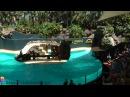 Лоро парк - Loro Park - Тенерифе - Канарские острова