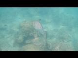 Часть подводного мира пляжа Freedom...