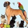 Животные| Продажа домашних животных |bim.com.ua