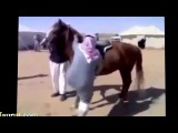 Funny videos clips try not to laugh - Most Funny Horse Videos 2015