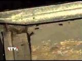 В Нью-Йорке появился новый тип тараканов, которым не страшны холода