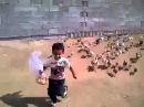Menino é perseguido por dezenas de galinhas