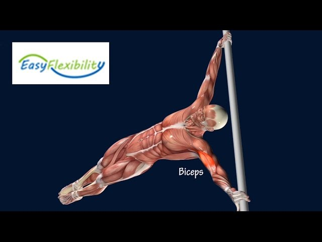 How To Human Flag Progression Tutorial Muscle Animation EasyFlexibility