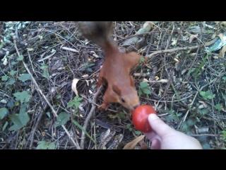 Как Денис Саранча угостил помидором белку