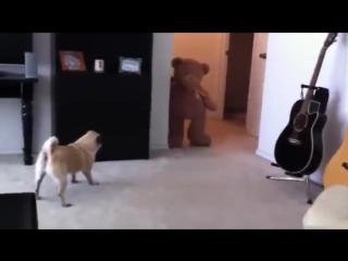 Собака увидела мишку и обкакалась