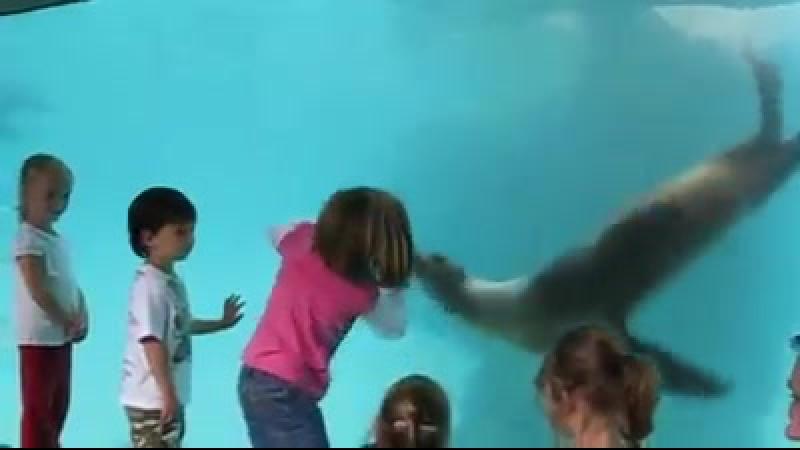 Çocukların Deniz Yaşayan Hayvanlarla İlk Tanışmaları.. Pekte İyi Bir Tanışma Olmuşa Benzemiyor ))