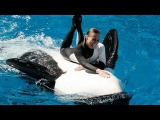 SeaWorld Trainers in the Water with Killer Whales (The Complete 2009 Shamu