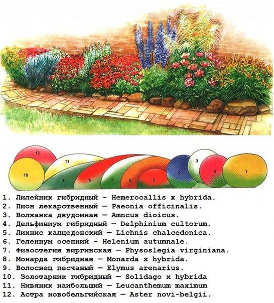 #идея #цветник #схема