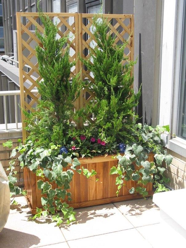 Типы опор для вьющихся, лазающих и других высоких растений