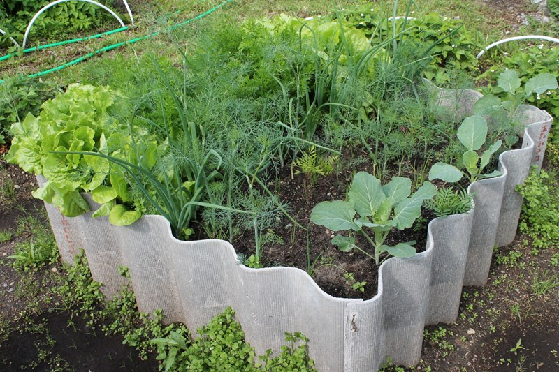 Как правильно сеять овощи