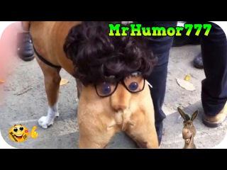 Приколы. Прикольные видео Смешное видео. Самое смешное видео в мире. Самые смешные приколы #84