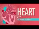 The Heart, part 1 - Under Pressure Crash Course A&ampP #25