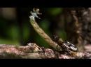 Biocoub Хищная гусеница Coockie Monster Carnivorous Caterpillar