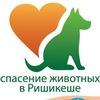 """""""Сибирь-Индия"""". Спасение животных."""