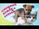 Самые смешные кошки и собаки ∙ Приколы с животными 2015 ∙ Cute Cats and dogs Compilation