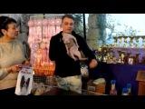 Пан Коцький МЕЖДУНАРОДНАЯ  ВЫСТАВКА  КОШЕК ,питомник starlinecat.com 4-5 апреля 2015