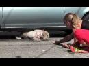 Спасение больной собаки на стоянке
