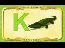 Multipedia Zwierząt Litera K Krokodyl