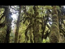 Hoh Rainforest, Olympic NP, Washington, USA in 4K (Ultra HD)