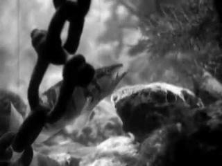 В глубинах моря (1939, Центрнаучфильм)