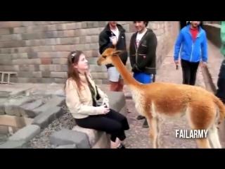 Самые смешные видео приколы с животными - супер приколы  (выпуск 9)