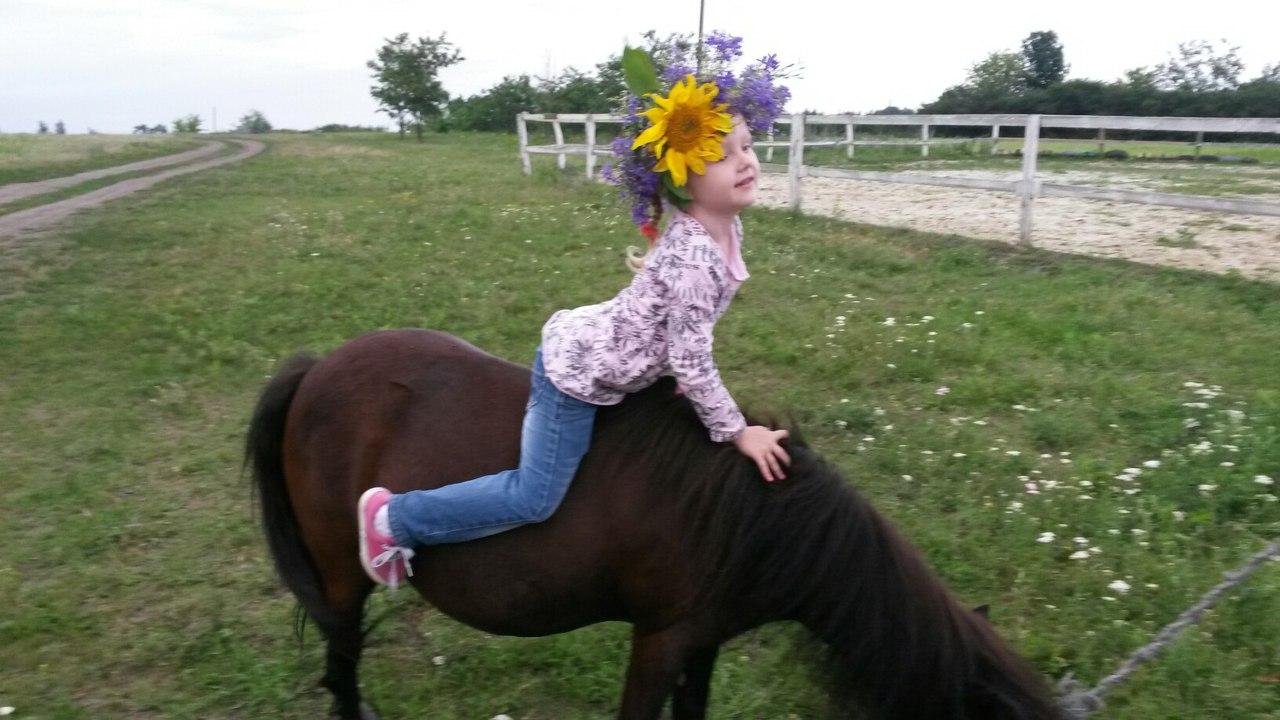 Инструкция по бонитировке лошадей владимирский тяжеловоз