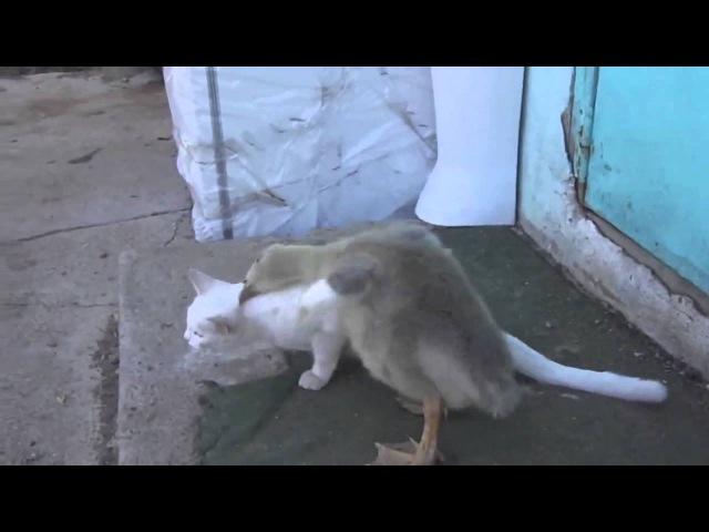 Обхохотаться можно - Duck and Cat play together