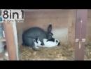 Мгновенный и беспощадный секс кроликов  Rabbit Lov...Oh Shit