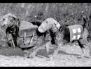 Собаки забытые герои Великой Отечественной войны