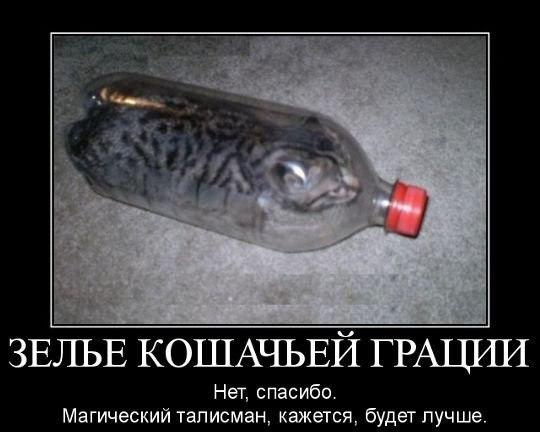 http://cs622231.vk.me/v622231993/f35a/wzxn6CtPlF0.jpg
