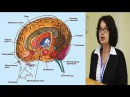 Структуры мозга Татьяна Строганова