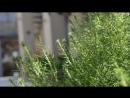Видео дачного домика в г Саки База отдыха Прибой