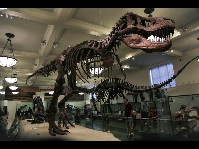 Нью-Йорк Музей естественной историиNYC American Museum of Natural History