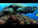 Oxygene - The Ocean (remix) [HD]