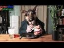 Самые смешные видео приколы с животными - супер приколы 2015
