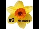 Нарцисс мастер класс, Фоамиран цветы, Мастер класс из фоамирана Foam Flouwers