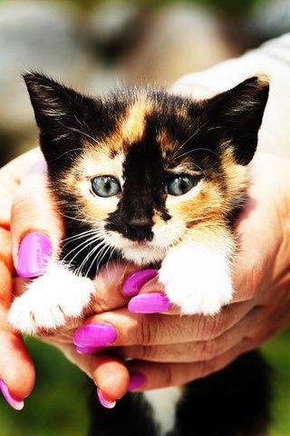 Трехцветные кошки приносят