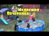 Медвежья вечеринка в бассейне.
