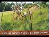 Целебные растения и их применение. Фитотерапевт Валерий Бабурин (часть 1)