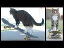 World's Best Skateboarding Cat Go Didga Go '