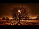 Dream Tree Project - Rising Up