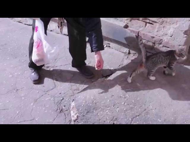 Аркадий Давидович спасает от голода русского котенка