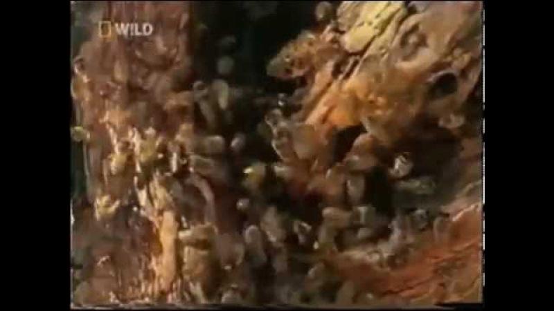 Медоеду похер