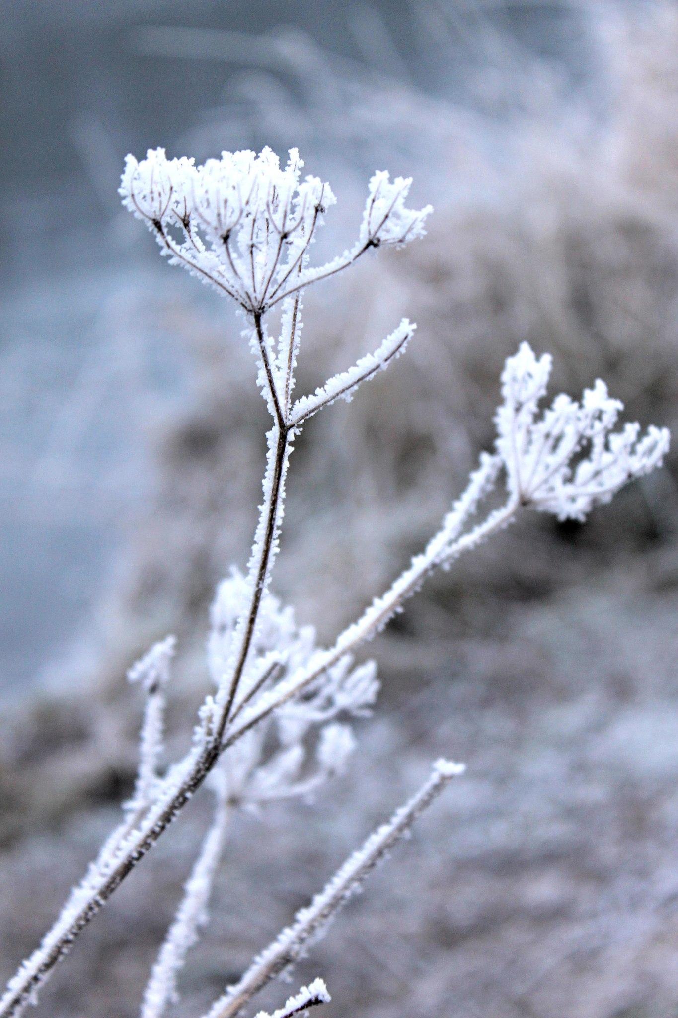 Зима, Петергоф, английский парк
