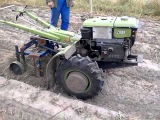 Мотоблок ZuBR-79 копає картоплю...